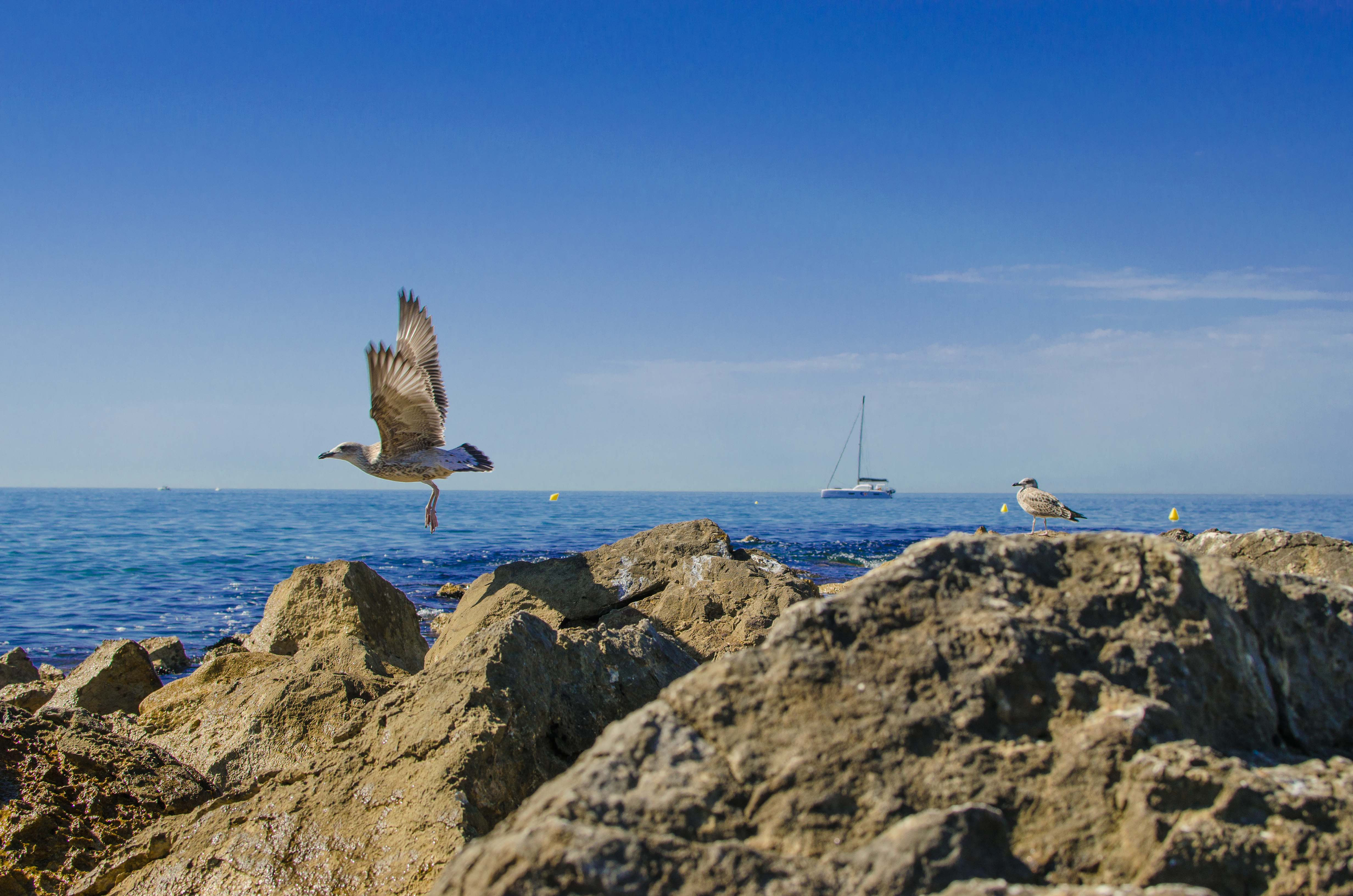 provenza37 Vacanze in Provenza, Camargue e Costa Azzurra