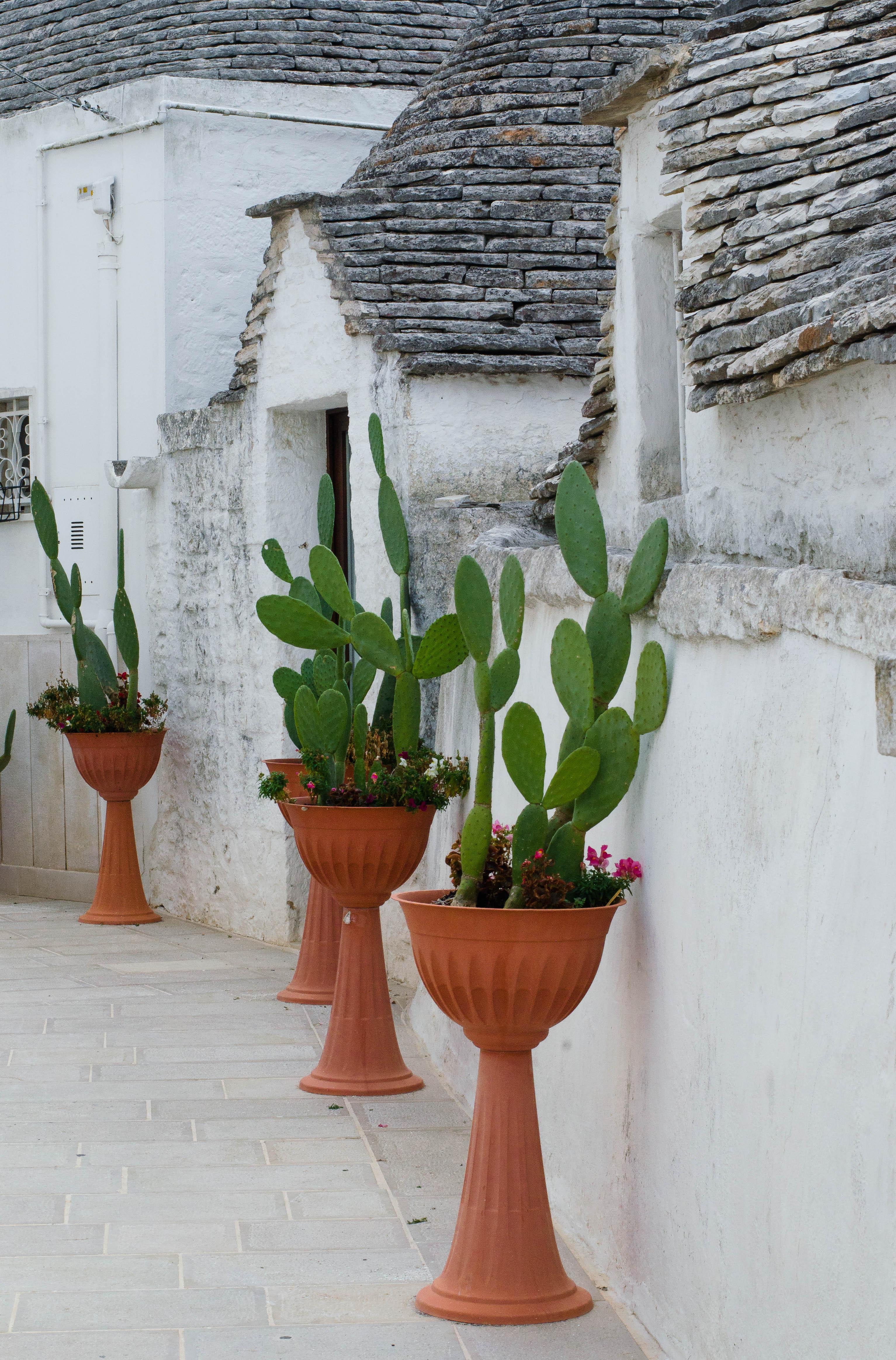 cactus Puglia ed Alberobello - parte 1-
