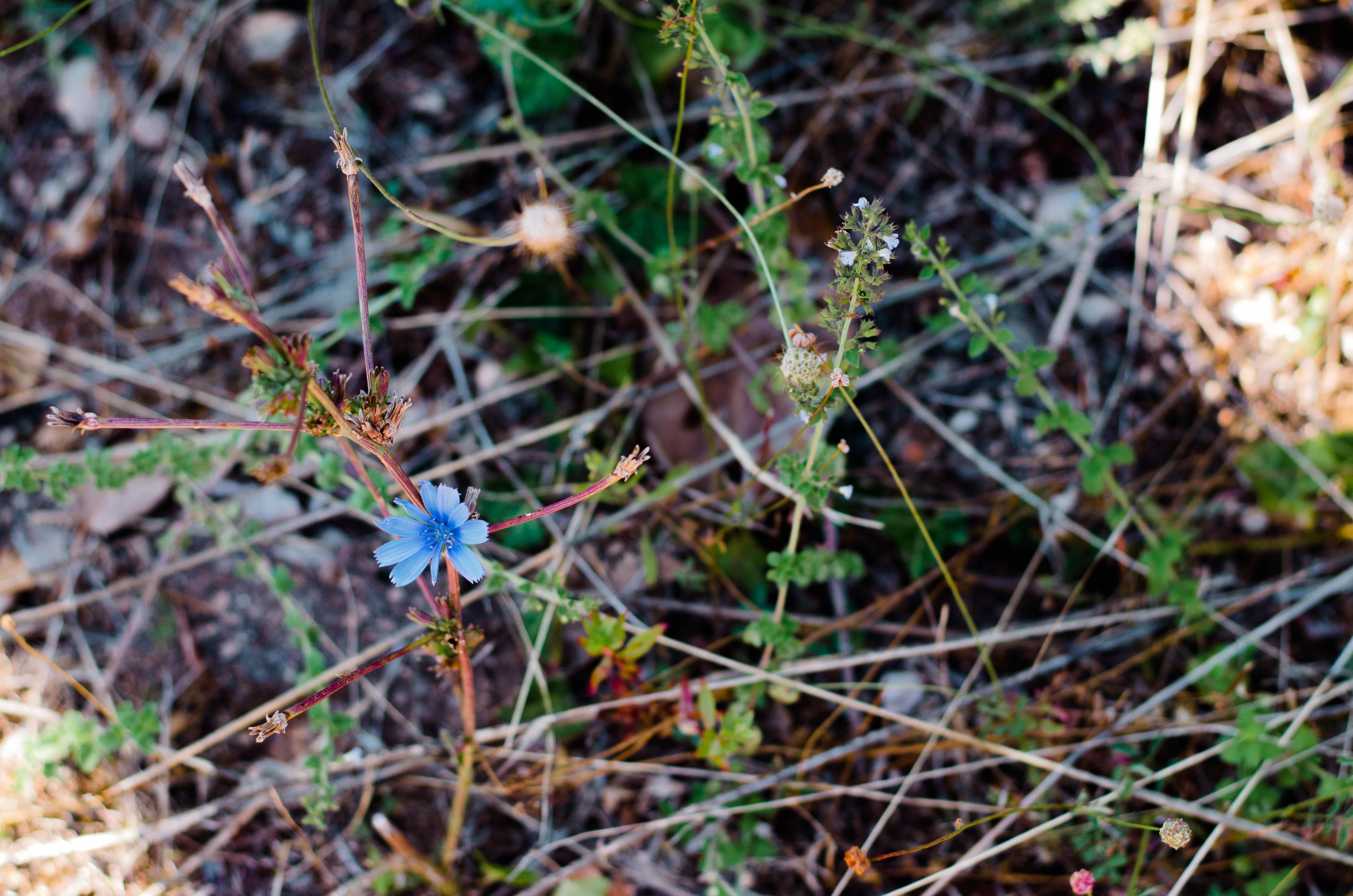 fiore-blu Puglia ed Alberobello - parte 1-