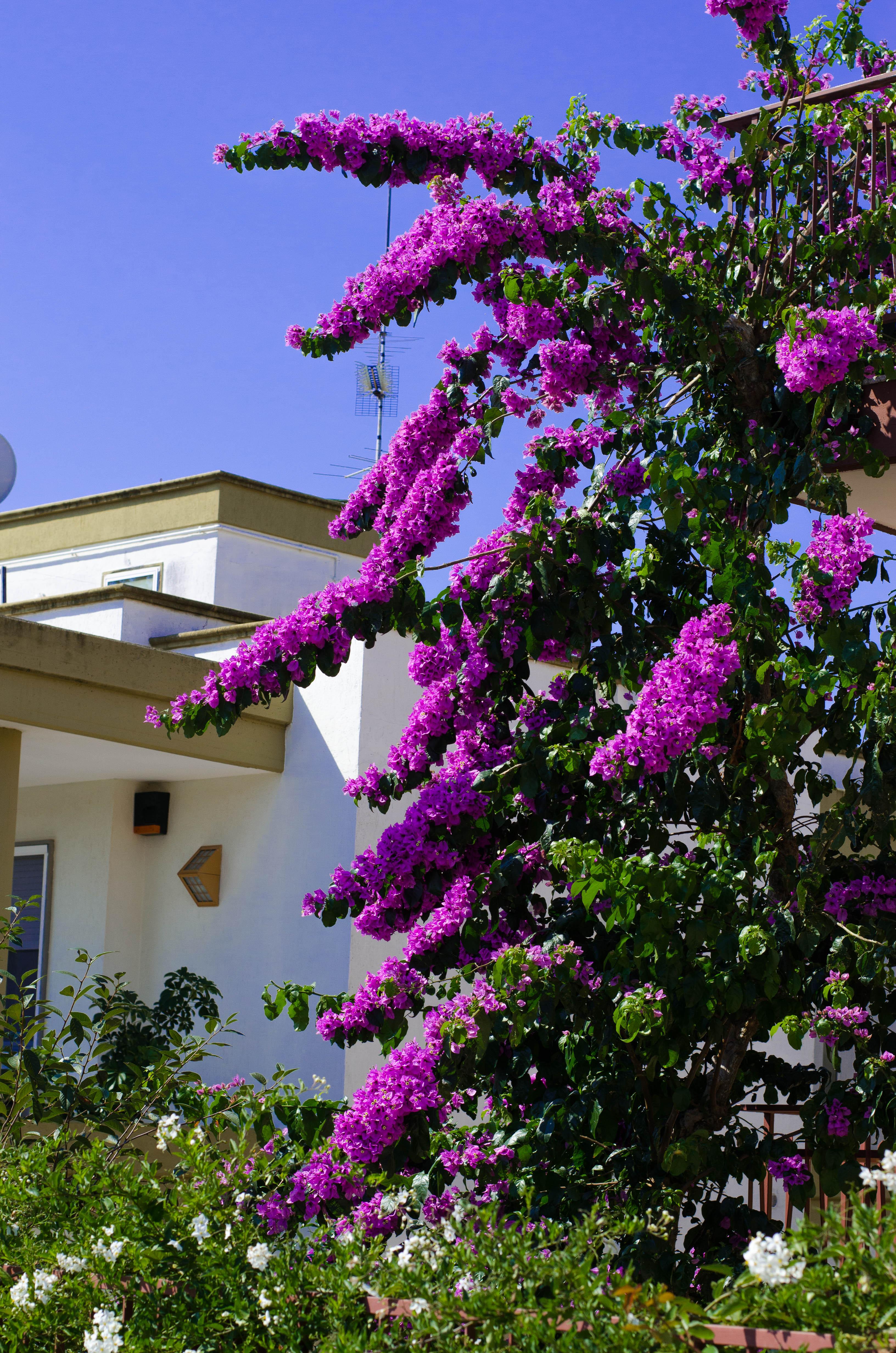fiori_esterno Puglia ed Alberobello - parte 1-
