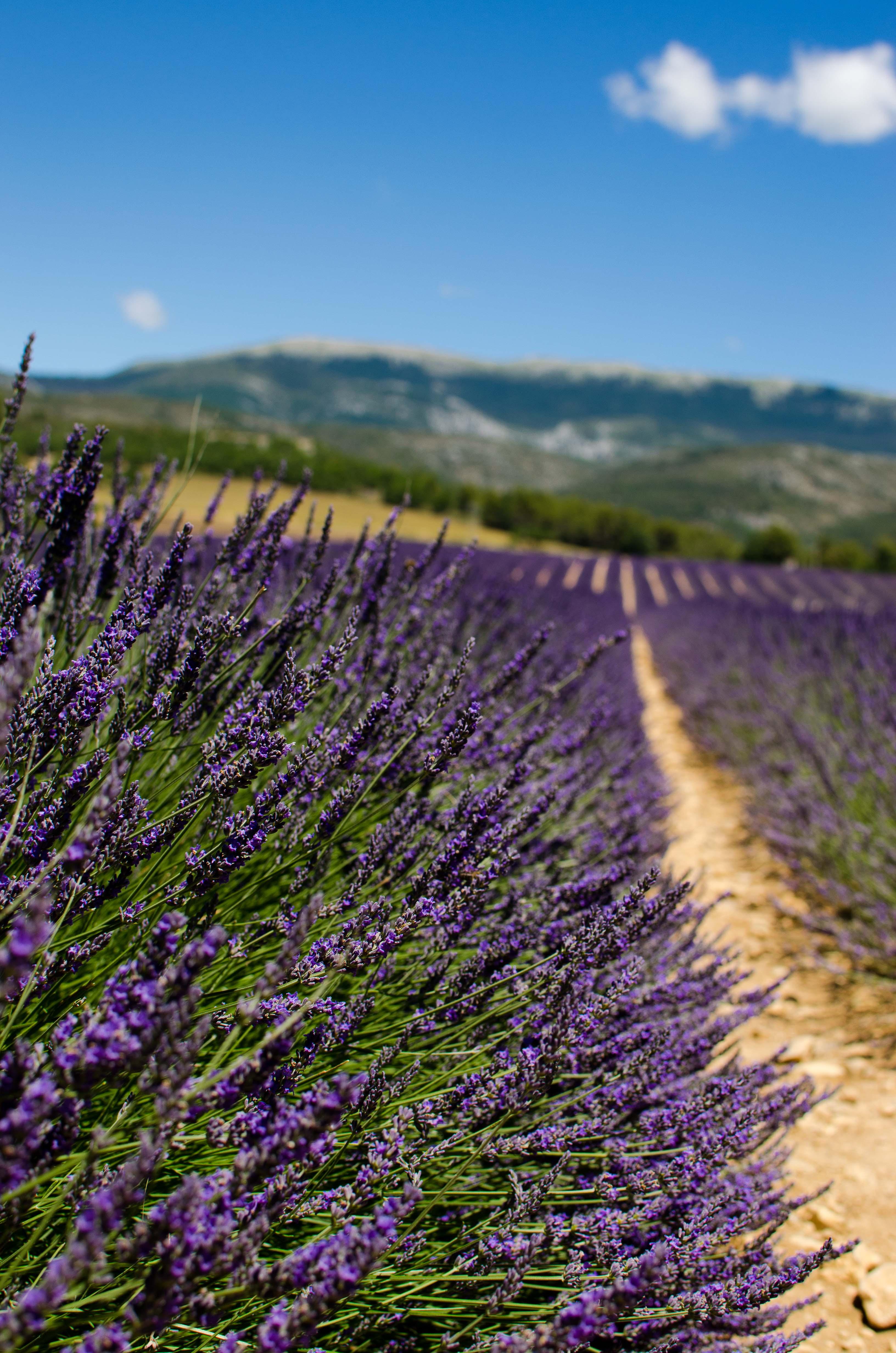 provenza3 Vacanze in Provenza, Camargue e Costa Azzurra