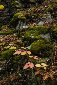 foglie-rocce-199x300 foglie rocce