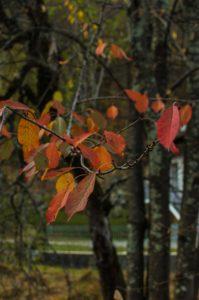 foglie1-199x300 foglie1