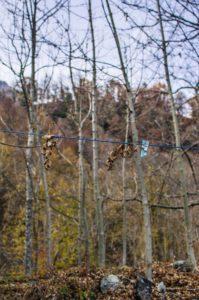 mollette-foglie-199x300 mollette foglie